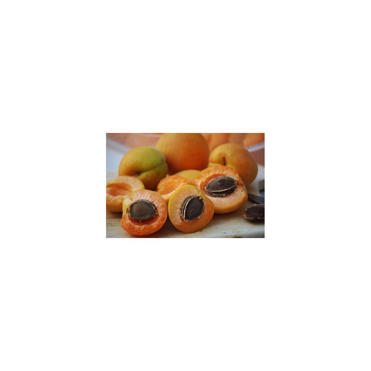 Noyau d'abricot poudre 50g