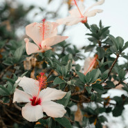 Fragrance Fleurs hawaiennes