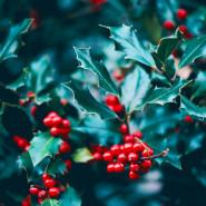 Fragrance Noël à la Campagne