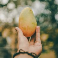 Fragrance Naturelle Mangue